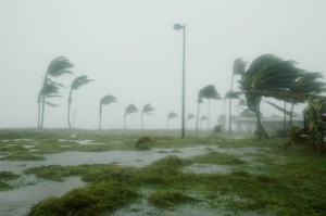 hurricane in key west blowing palm trees